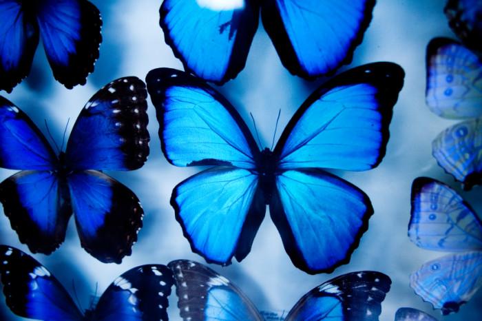 Amazonian butterflies behind glass. ©iStockphoto.com/simonox